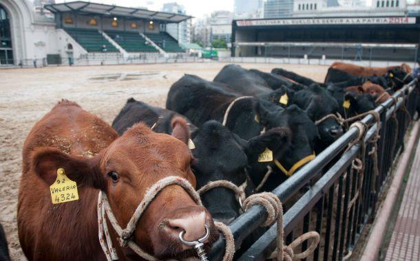 Expectativa. La exposición rural de Palermo mostró un mejor clima en el negocio ganadero.