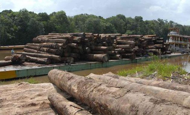 Se talan actualmente unos 15.000 millones de árboles por año.