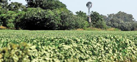Crece la yuyodependencia: 7 de cada 10 hectáreas estarán plantadas de soja