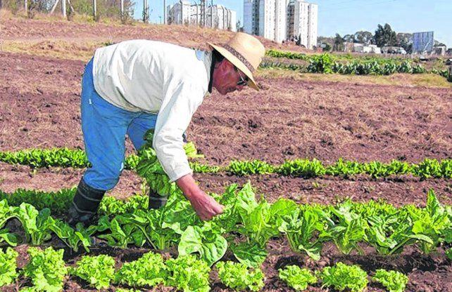 huerta urbana. Una alternativa a la producción industrial de alimentos.