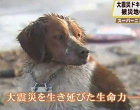 La lealtad sobrevive a la tragedia de Japón (Video)