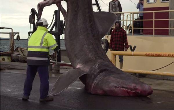 La última captura del pez peregrino fue en 1930.