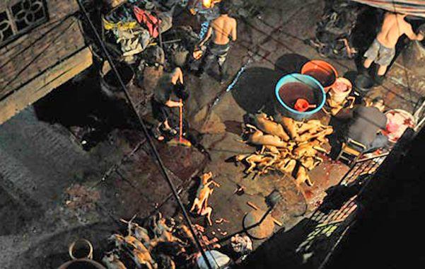 Raro. Un cocinero rodeado de perros faenados en un restaurante de Yulin.