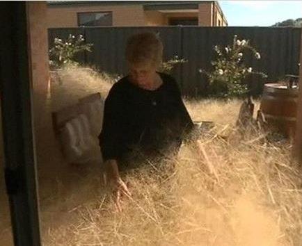 En la localidad australiana de Wangaratta están literalmente desbordados.