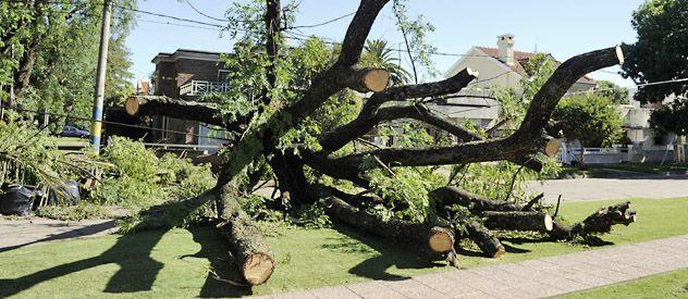 Alberdi. Un árbol se cayó en Mazza y Herrera.