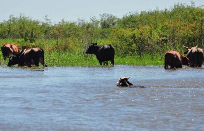 El gobierno santafesino recomienda a los productores ganaderos que se preparen para posibles evacuaciones de hacienda.