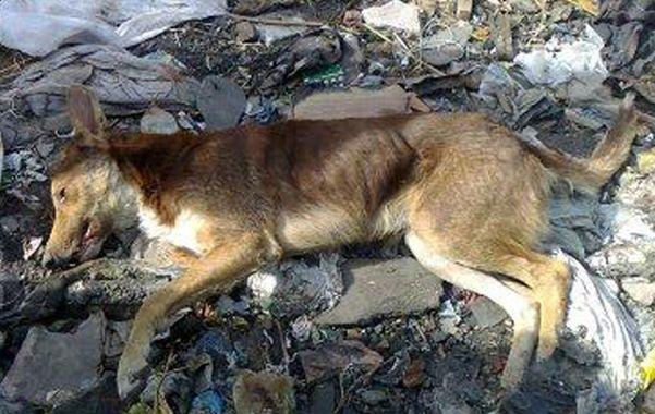 Horror. Cerca de 20 canes aparecieron muertos a lo largo de dos cuadras.