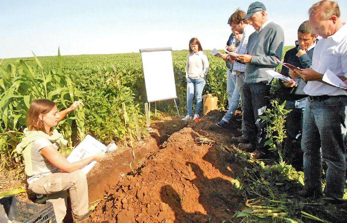 Los equipos del Sistema Chacras dan cuenta del impacto que tienen las rotaciones y la intensidad de las gramíneas sobre la salud de los suelos.