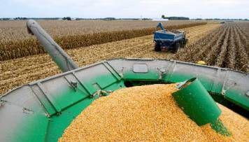 Pronostican cosecha récord de maíz