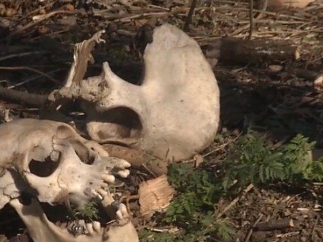 El hallazgo lo hicieron unos huerteros que estaban en la zona. (Foto: captura de TV)
