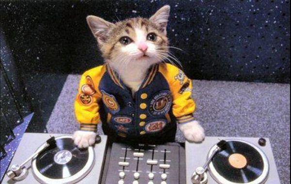 Los especialistas lograron crear música diseñada para atraer a los gatos a partir de la mezcla de ritmos.