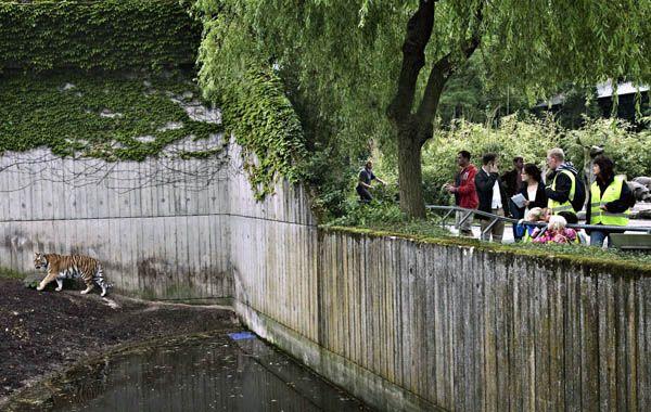 La Policía danesa manejaba dos hipótesis en la investigación: una que pueda ser un suicidio o bien que el joven cayera en el recinto al ceder la valla protectora.