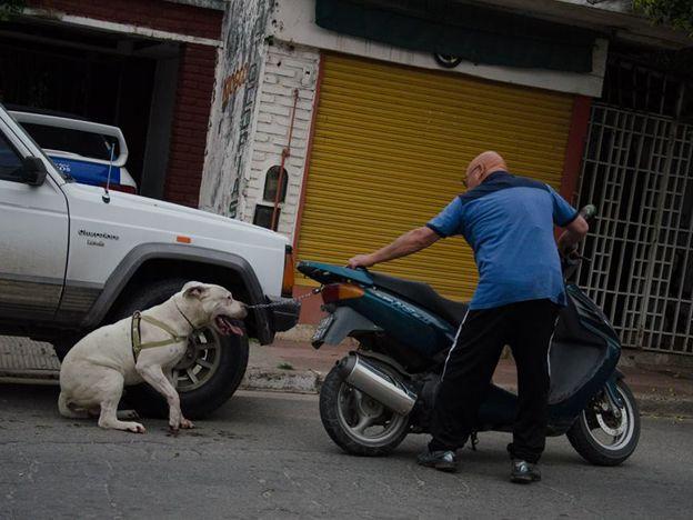 Un fotógrafo captó cuando un hombre maltrataba a su perro y logró que la policía lo detuviera