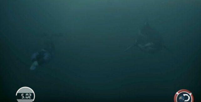 El campeón olímpico Michael Phelps midió fuerzas con un tiburón blanco.