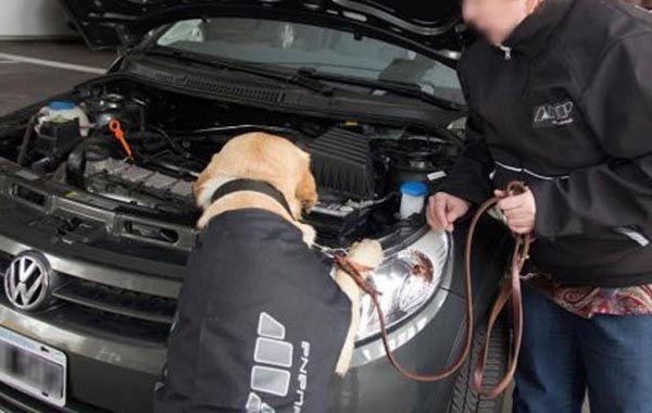 Un perro de la AFIP detectó dólares en el motor de un auto que cruzaba a Uruguay