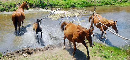 Productores de Arroyo denuncian el robo permanente de caballos