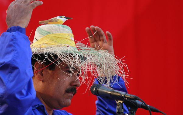 Un pájaro en la cabeza. Maduro prometió acatar la voluntad popular.