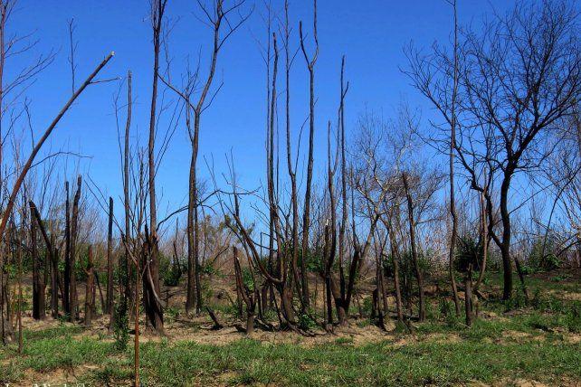 ÁRBOLES QUEMADOS. Los incendios arrasaron este año con miles de hectáreas.