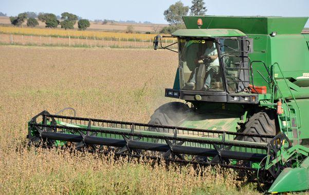 Al grano. El fondo sojero crece este año de la mano de una mejor cosecha.