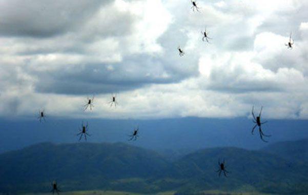 Las arañas se posaron sobre New South Gales