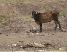 El fin de la sequía: estiman que para octubre se normalizará el ciclo de lluvias