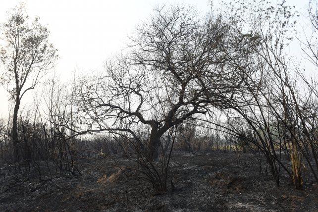 La extrema sequía retrasa la recuperación del suelo