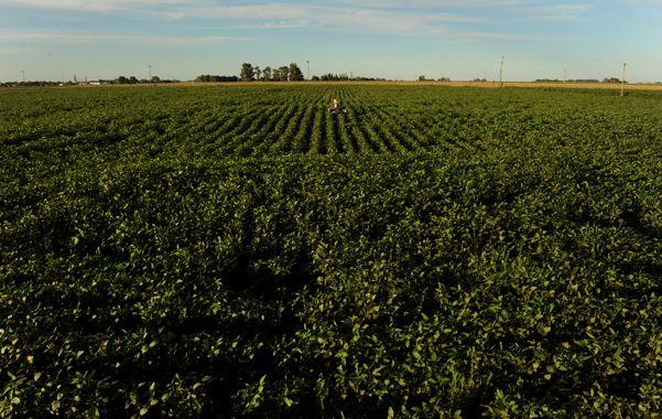 Sojización. La soja le gana hectáreas a otros cultivos