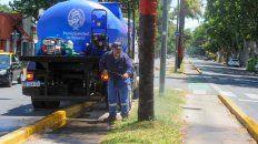 La semana pasada las cuadrillas de la Municipalidad de Rosario tuvieron que limpiar unas 50 palmeras que habían sido pintadas en avenida Presidente Perón.
