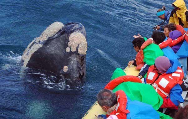 De excepción. Unos cien mil turistas visitaron el golfo Nuevo.
