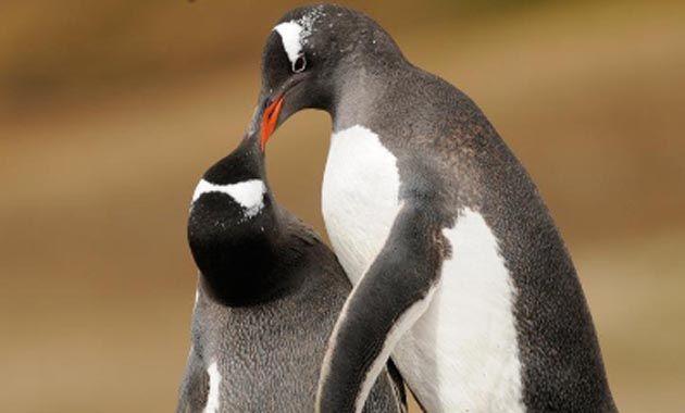 Una de las imágenes publicadas ayer por Greenpeace en Twitter por el Día del Pingüino.