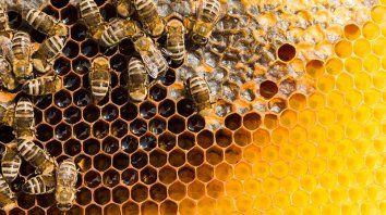 El Proyecto Lactosuero...utilizar para no desechar consiste en la obtención de suplementos proteicos, de bajo costo económico, para el consumo de las abejas del apiario.