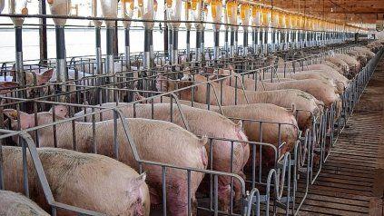 La actividad porcina crece en Entre Ríos.Foto/Gentileza: Capper