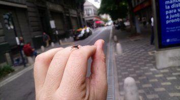 ¿Qué son esos bichos? Moscas extrañas invadieron la ciudad de Rosario