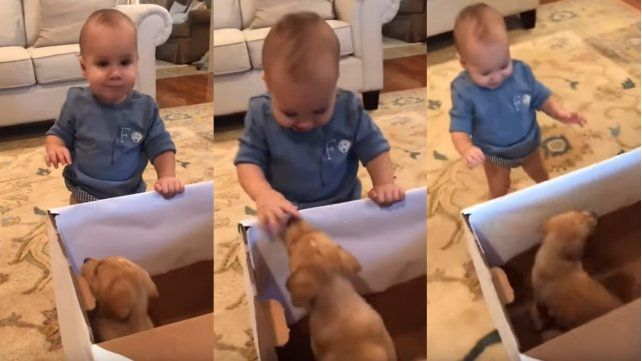 Video: la increíble reacción de un bebé al recibir un cachorro de regalo que explotó en Tik Tok