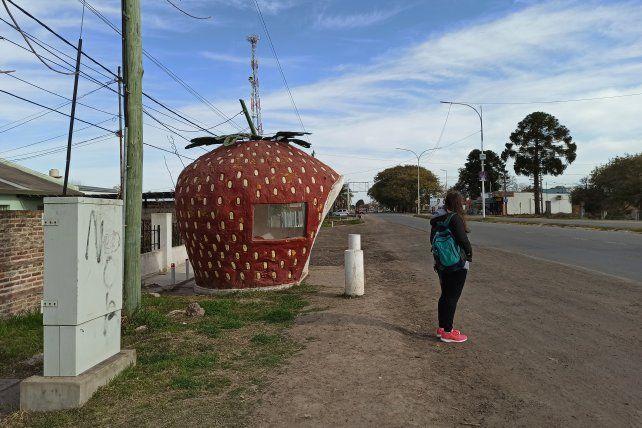 Coronda es frutilla. El fruto está presente hasta en la parada del colectivo.