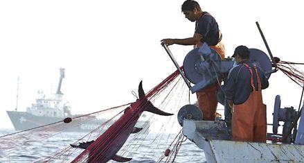 Un tercio de los mares está gravemente dañado por la pesca