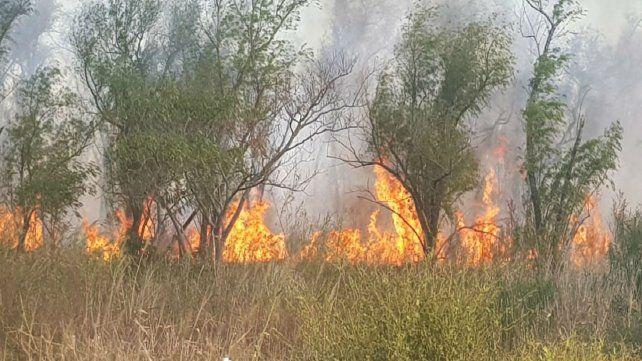 Alerta en los paradores del banquito San Andrés por un incendio de pastizales