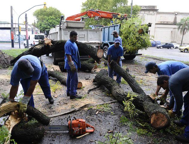 Se atendieron más de 250 reclamos de caídas de ramas