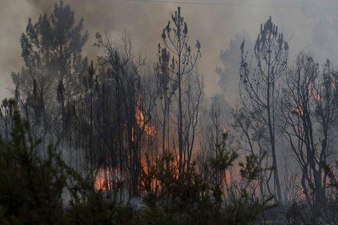 pedrógo grande. El fuego comenzó el sábado en el distrito de Leiraia