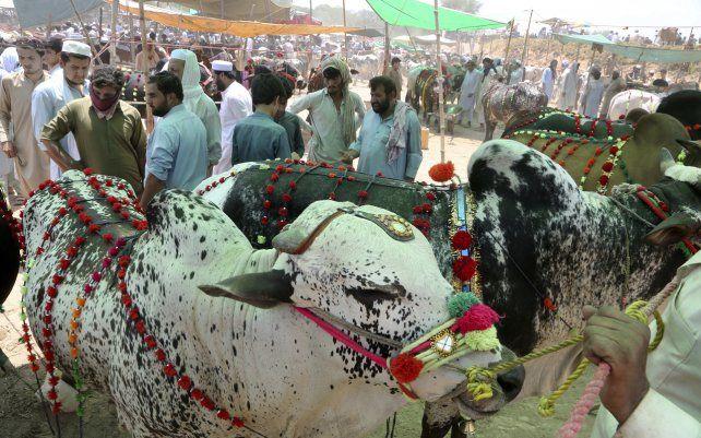 La gente negocia con los vendedores para comprar animales para la próxima fiesta musulmana de Eid al-Adha o Fiesta del Sacrificio