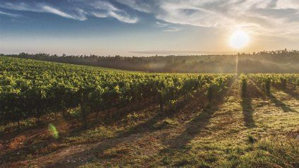 Entre viñedos, telares y naturaleza riojana