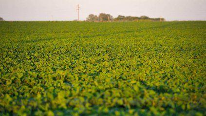 El contrato de la soja julio cayó u$s 4,6 la tonelada en el mercado de Chicago.