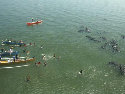Más de 100 delfines quedaron varados en una isla filipina y al menos tres murieron