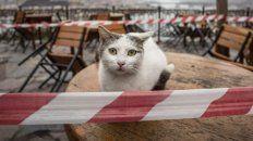 Un pequeño gato dio positivo de Covid-19 en Corea del Sur y se encieron las alertas.