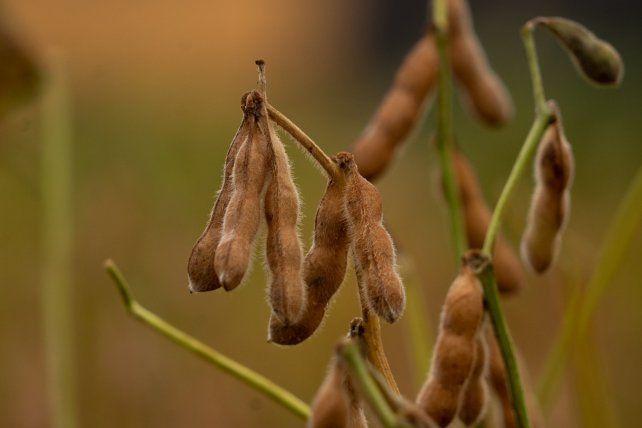Las exportaciones de harina de soja cayeron 22  por ciento en julio