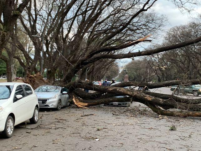 El fuerte viento hizo que un árbol cayera sobre dos autos y que volara la bandera más alta de la ciudad