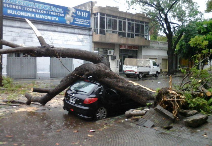 En Sarmiento y Garay un árbol cayó en plena la calle y no permite la circulación. (Foto G. De los Ríos)