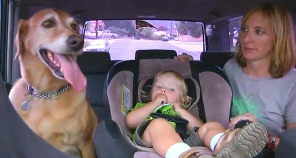 Si tu perro está aburrido ponele DogTv, el nuevo canal para canes