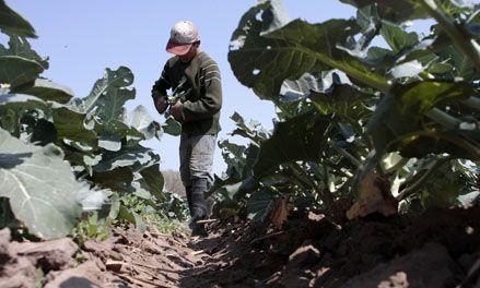 Más de 150 quintas de la región desaparecieron en los últimos años