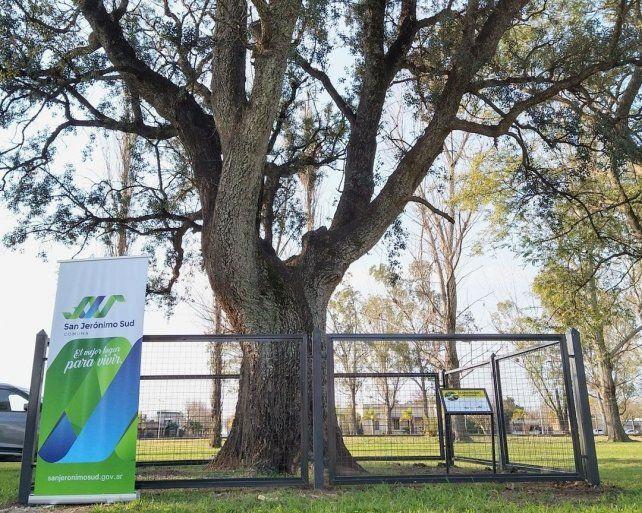 Como parte del mes del árbol, se realizó una nueva cerca para el alcornoque histórico ubicado en los espacios del ferrocarril.